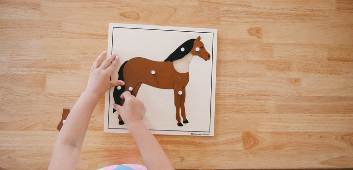 Montessori Preschool Philosophy: Synergy of Education and Play